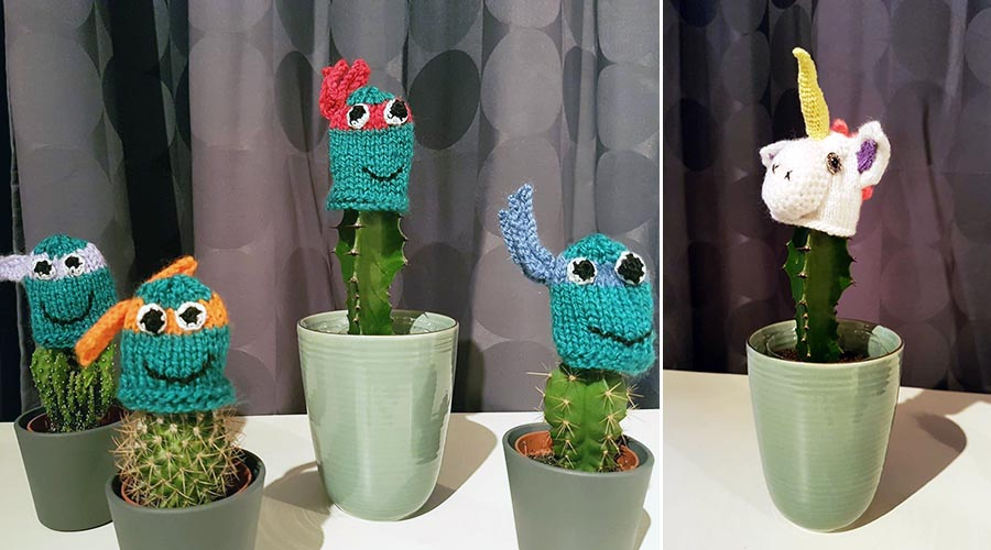 Bonnets innocent cactus